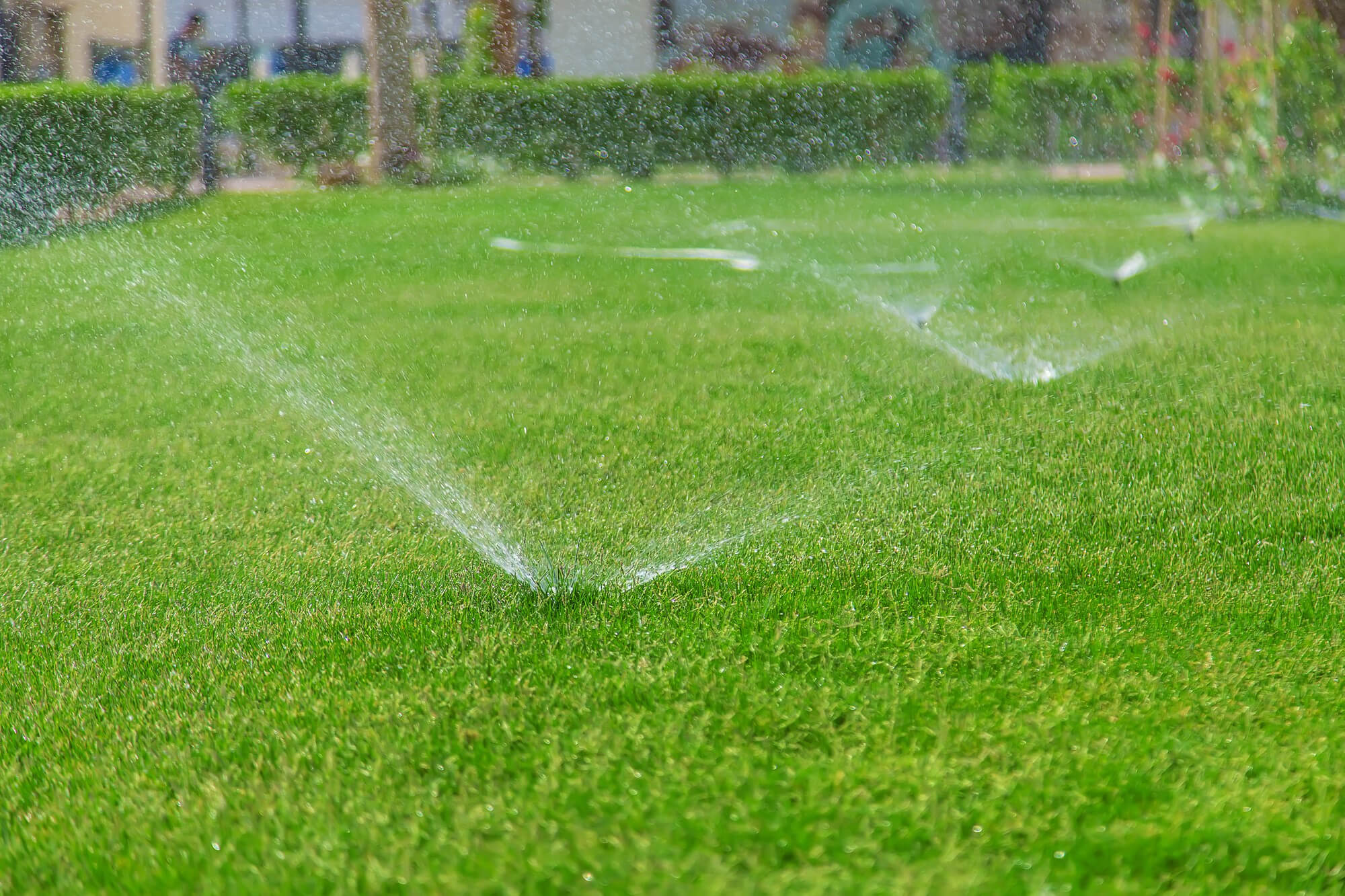 Lawn Care Problems from Watering