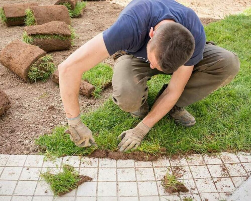Starting a Lawn Cut Business