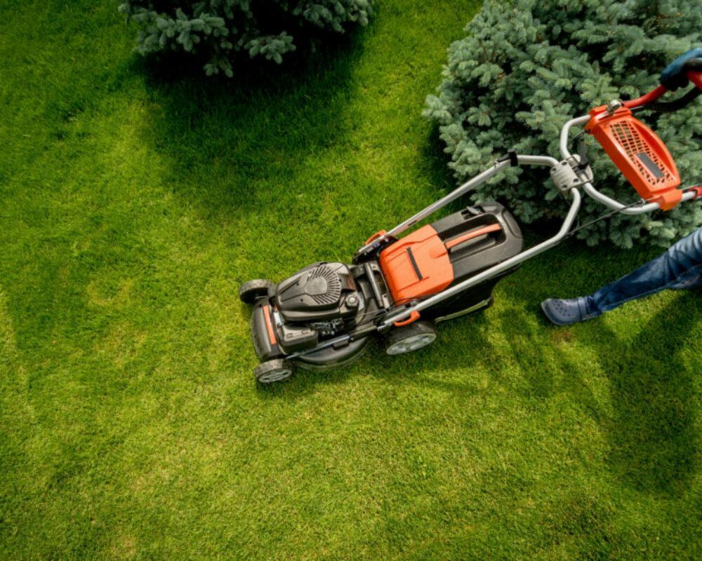 landscape design green grass