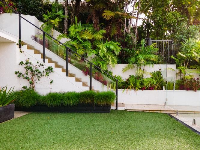 home lawn grass